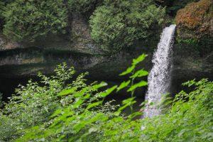 waterfall with greenery